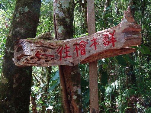 鎮西堡檜木林區~2012秋遊新竹(二) (9)
