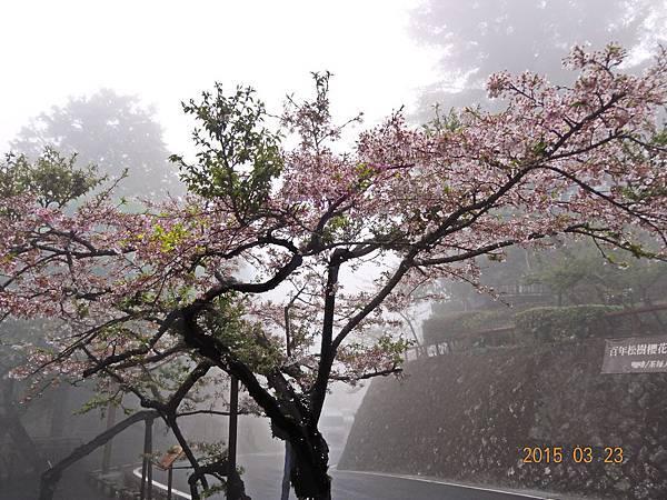 20150323阿里山 (2).JPG