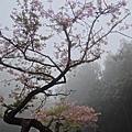 20150323阿里山 (13).JPG