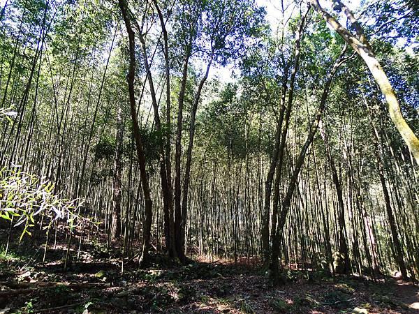 B八仙森林 5.JPG