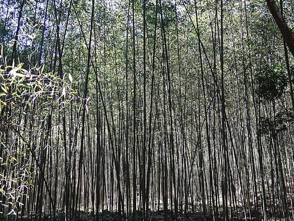 B八仙森林 13.JPG