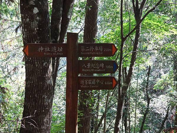 B八仙森林 15.JPG