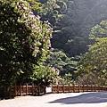 B八仙森林 8.JPG