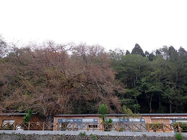 觀霧 (A2)