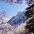 20170119-20黃山 (48).JPG