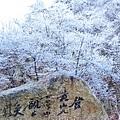 20170119-20黃山 (14)