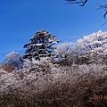 20170119-20黃山 (78).JPG