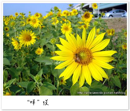 DSC01366.jpg