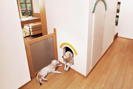 dog07-2.jpg