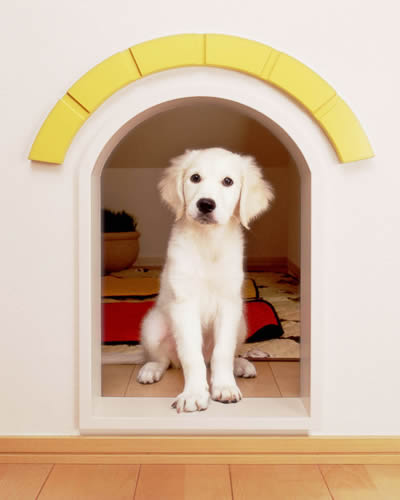 dog07-1.jpg