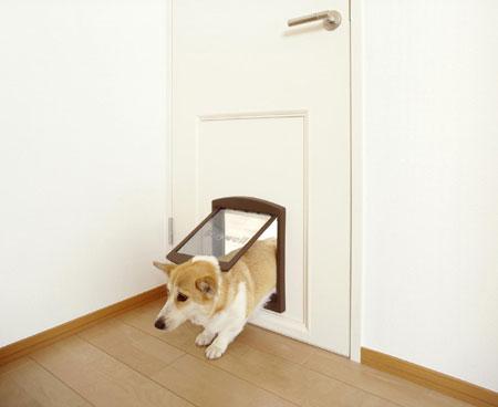 dog12-1.jpg