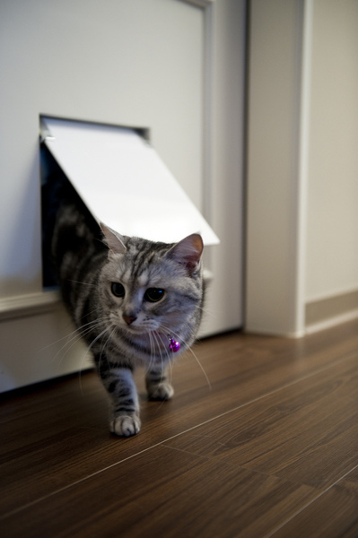 Z-cat-07_resize.jpg