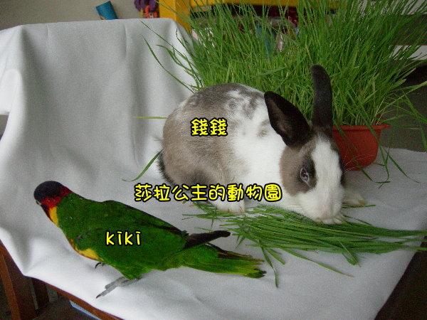 部落格kiki3.jpg