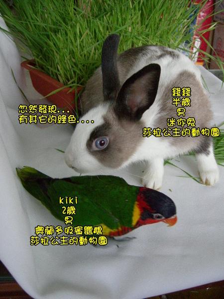 部落格kiki4.jpg