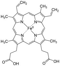 血紅素結構.png