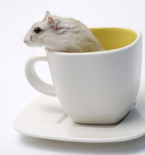 豆漿 老鼠