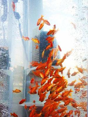金魚電話亭