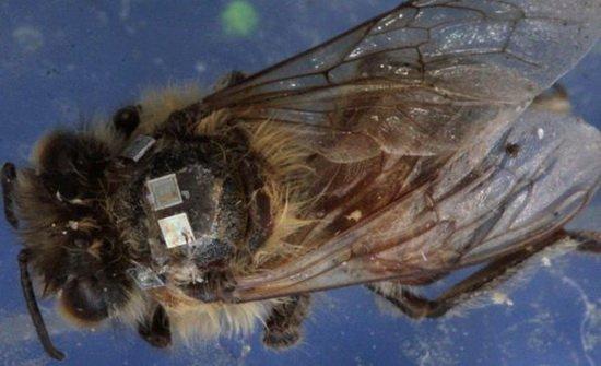 蚤蠅殭屍蜜蜂