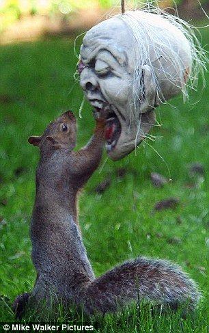 萬聖節驚見松鼠殭屍! - 松鼠殭屍