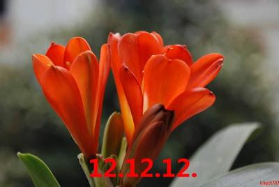 世界示愛日 2012年12月12日