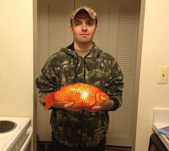 巨無霸金魚
