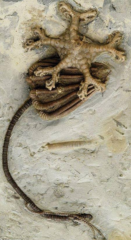 3億年前異形