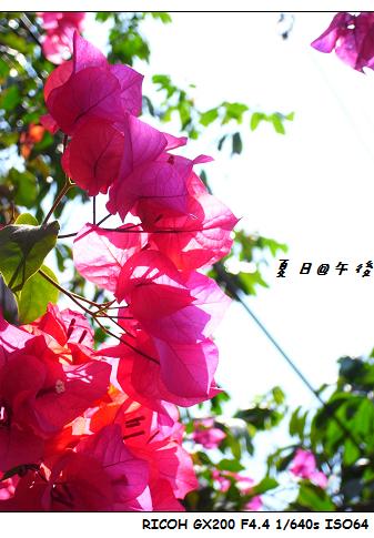 RIMG0979.jpg