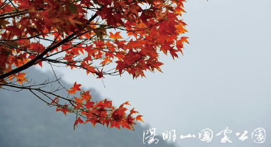 陽明山_01.jpg