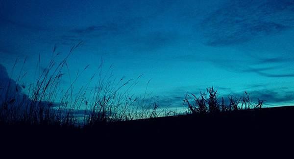 【書寫音樂】望你知影阮心意,願將魂魄交給你:〈花若離枝〉_艾莫西