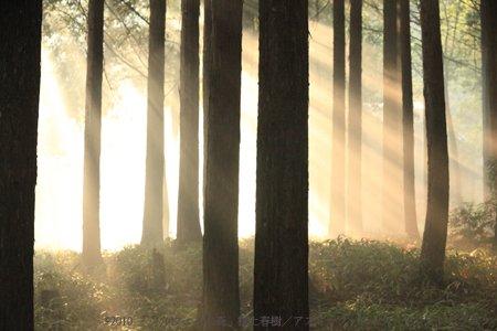 挪威的森林電影版