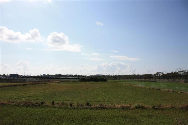 民宿後面是一大片的田
