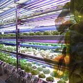 樂天超市 - 超大一面的蔬菜牆