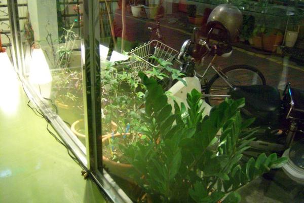 店外種有一些植物,還看到店員出去摘了些,難道是當作食材嗎?