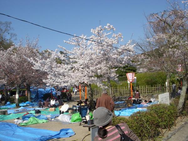 1368_円山公園.jpg