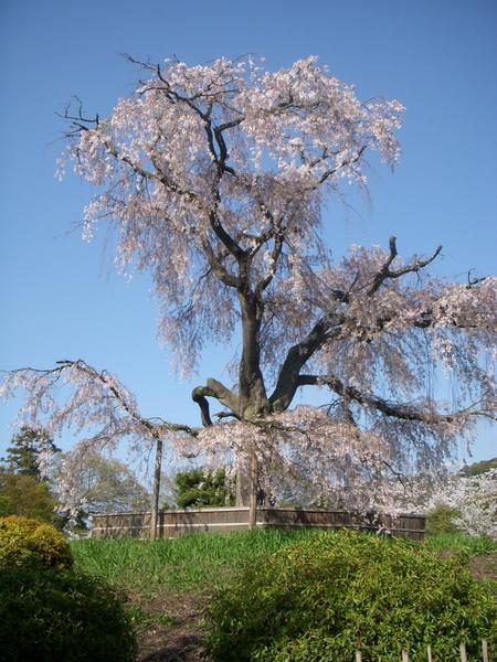 1369_円山公園.jpg