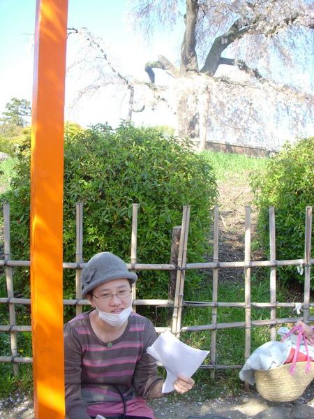 1381_円山公園.jpg