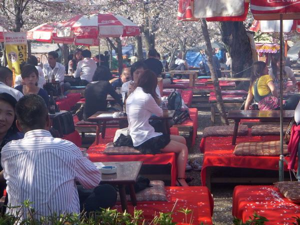 1387_円山公園.jpg