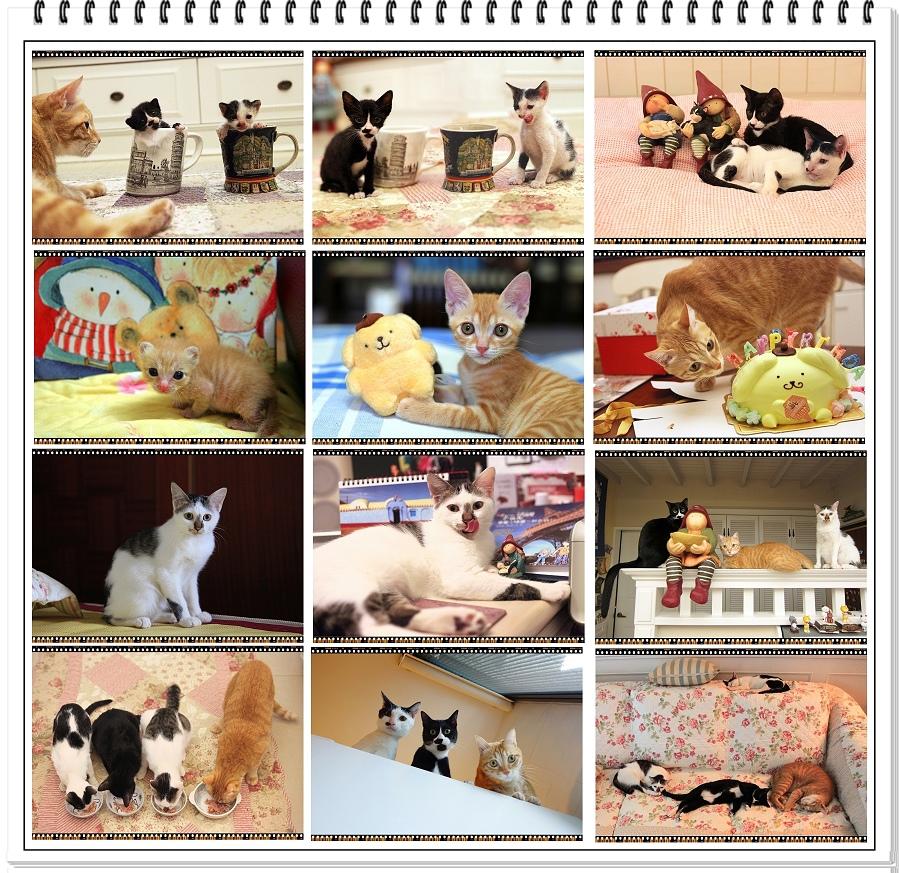 貓咪-白s2.jpg