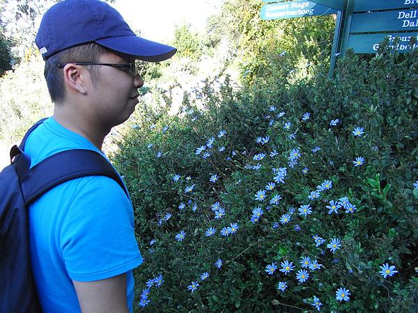 假到靠背的真花
