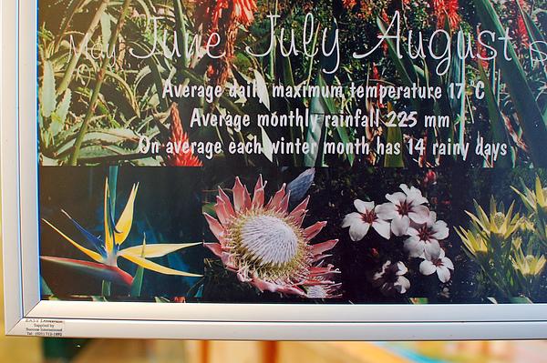 南非國花 : 帝王花 (中間) 夏天才會開花, 所以這次沒看到...