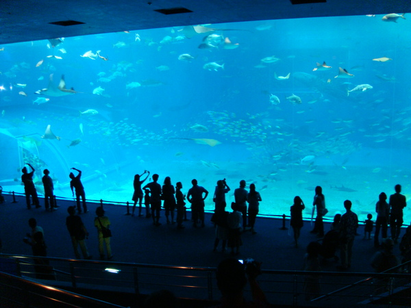 據說是東南亞最大的水族箱