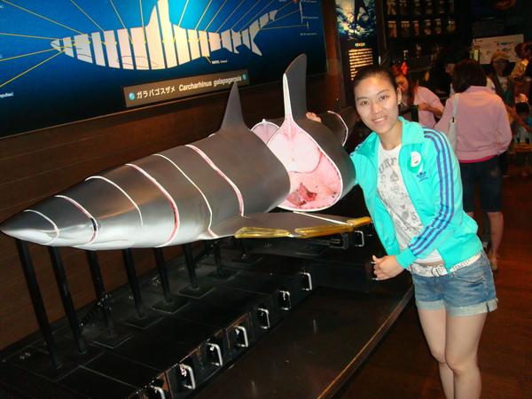 還有鯊魚解剖可以玩