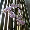 牛頓館內蘭花