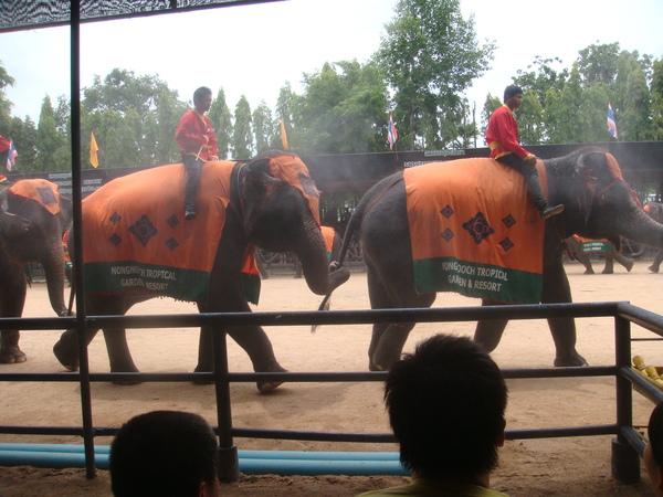 再來是看大象表演