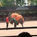 大象們的表演