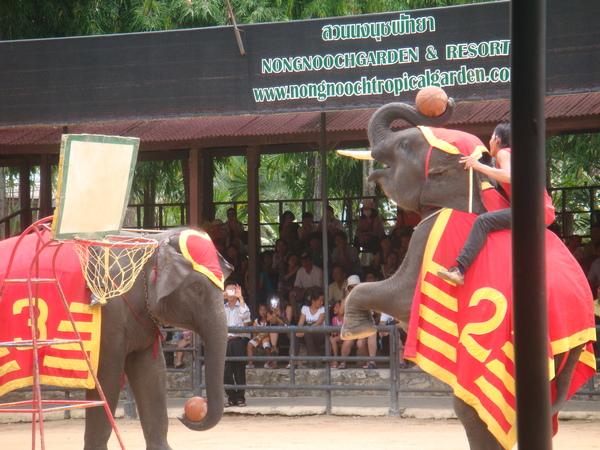 大象投籃也超好玩的