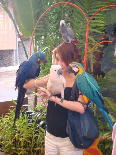 這些鸚鵡都好乖喔
