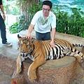 任你摸的老虎