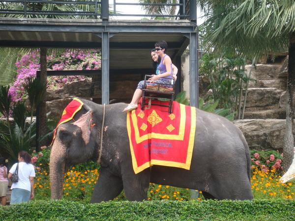 有提供大象遊園,不知道要多少錢