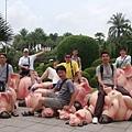 一人騎一隻豬的大合照